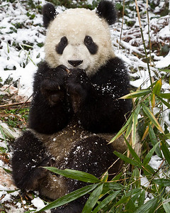 But I do love fresh bamboo that I get to cut myself.