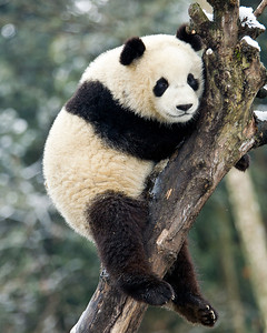 Well I got myself up this tree, now what am I supposed to do?