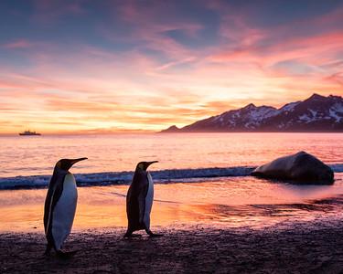 The Falkland Islands and South Georgia Island